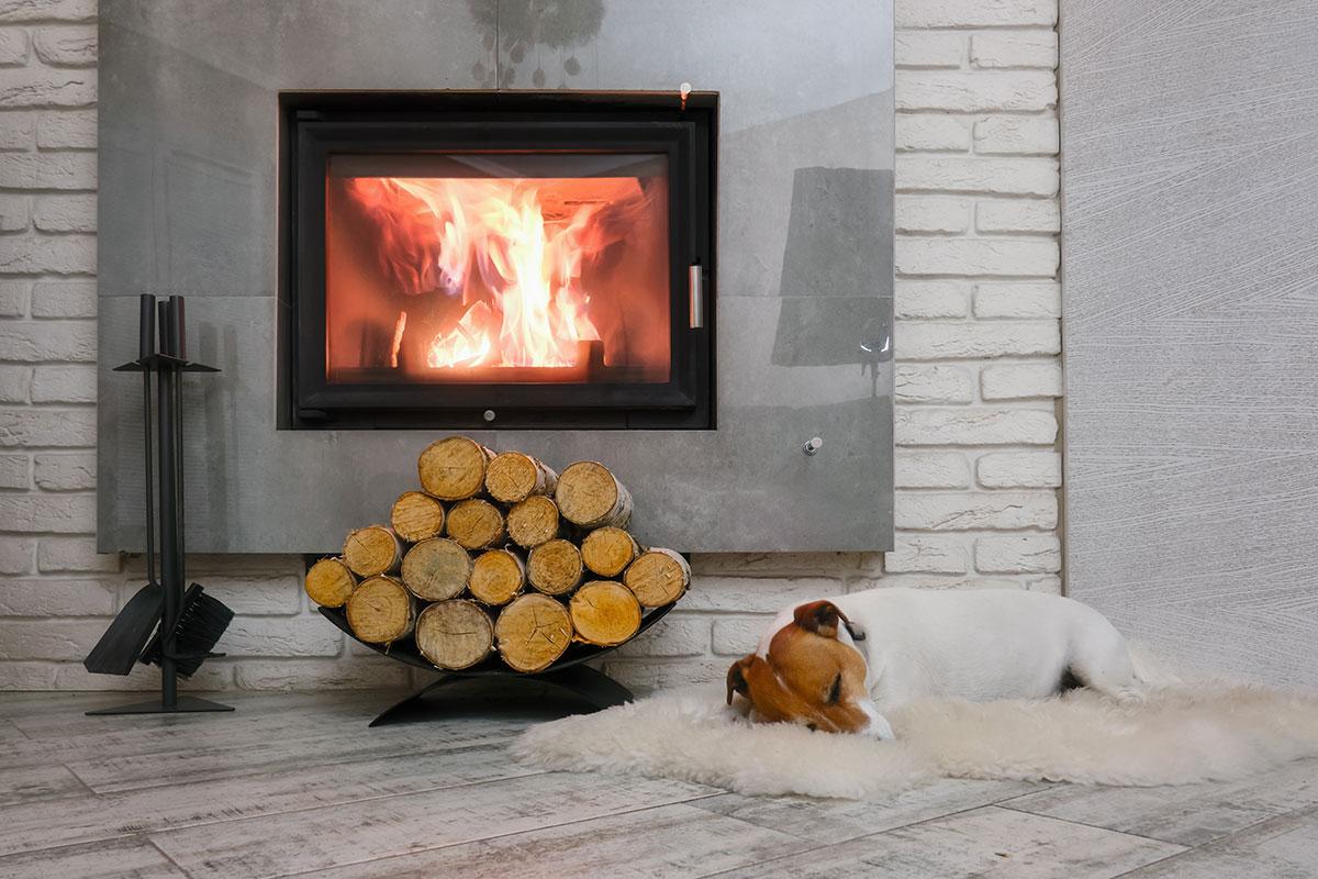 Dog-Sleeping-by-Fireplace