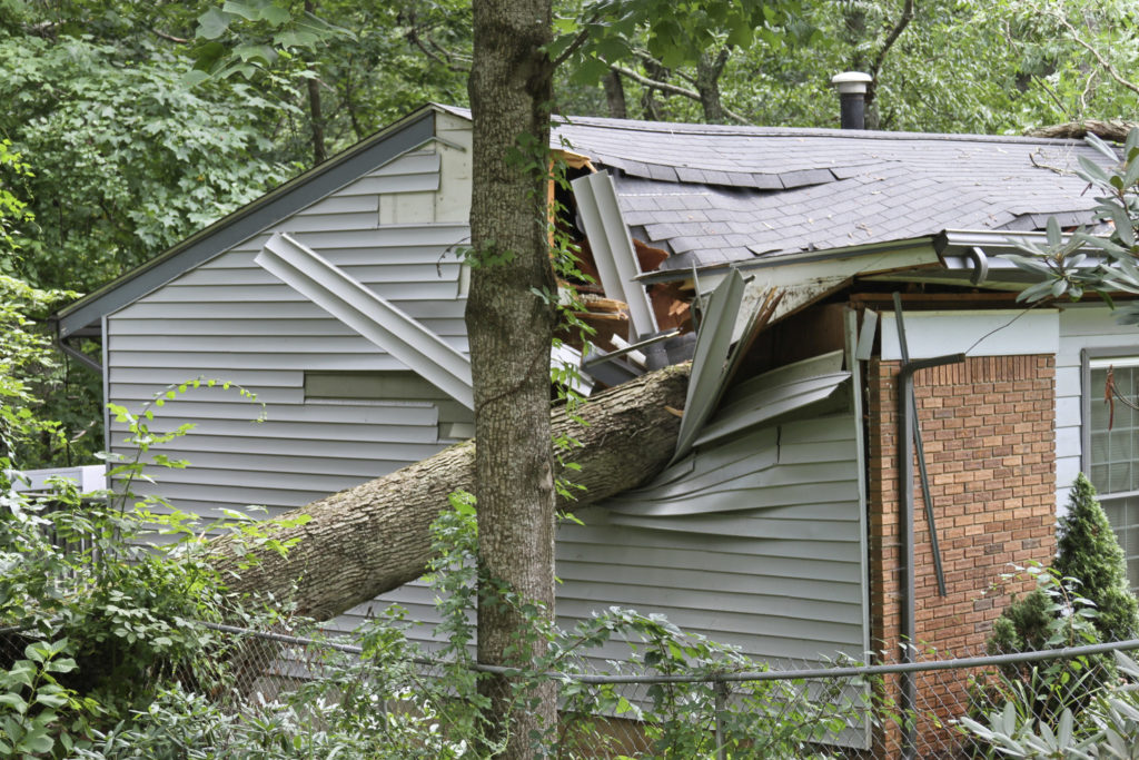Blog - Small House Crushed By a Large Oak Tree